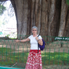 Senora Koski with the Tule tree in Mexico